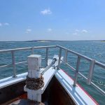 Beautiful summer day on a nature cruise with American Beauty Cruises & Charters in Sag Harbor